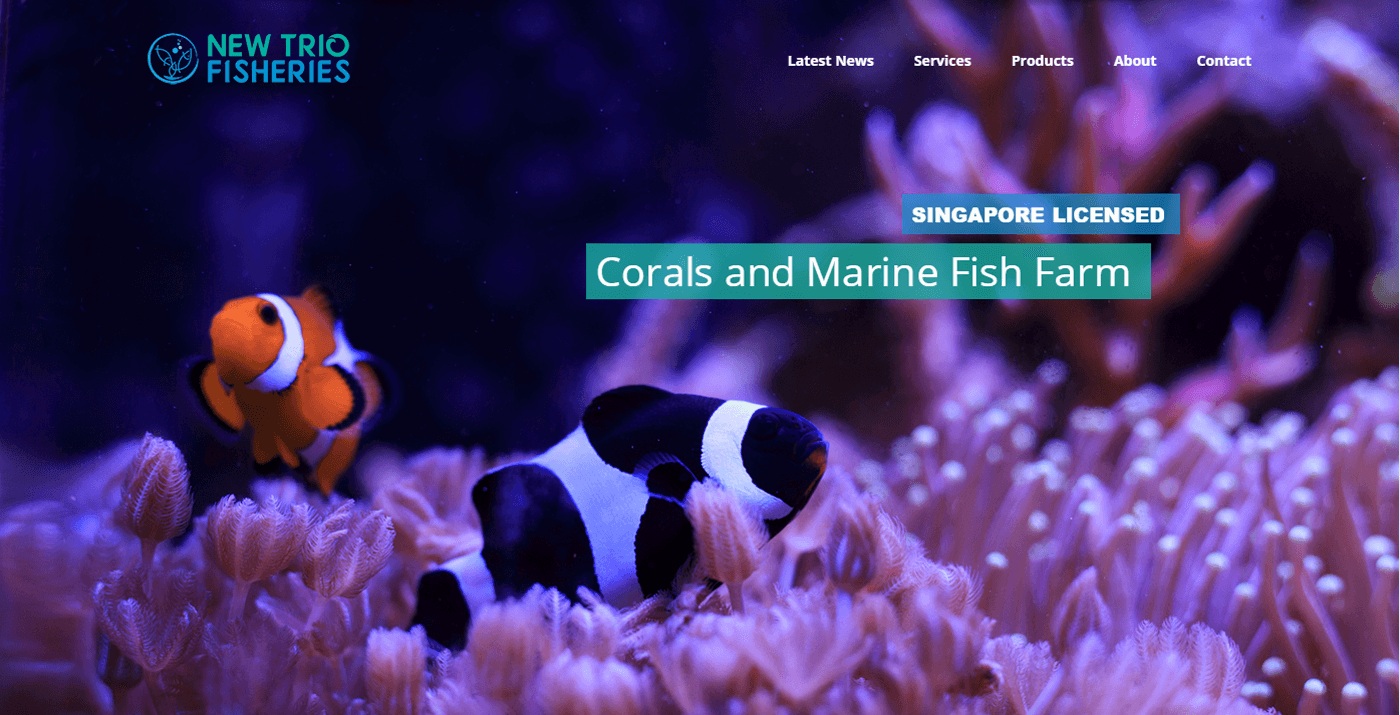 Thinking Notes Projects Showcase - New Trio Fisheries Website